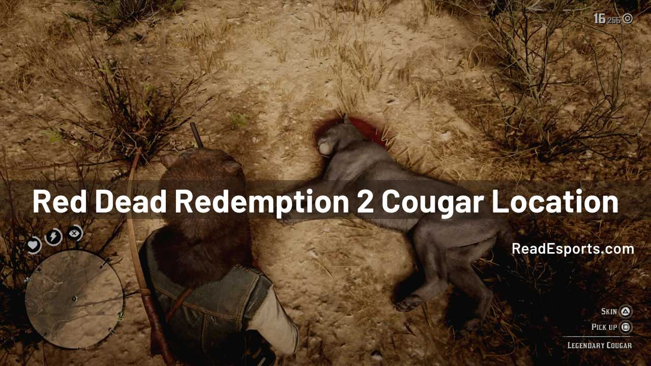 cougar locations rdr2, cougars rdr2, rdr2 cougar hunting, rdr2 cougar location, rdr2 cougar locations, red dead redemption 2 cougar location
